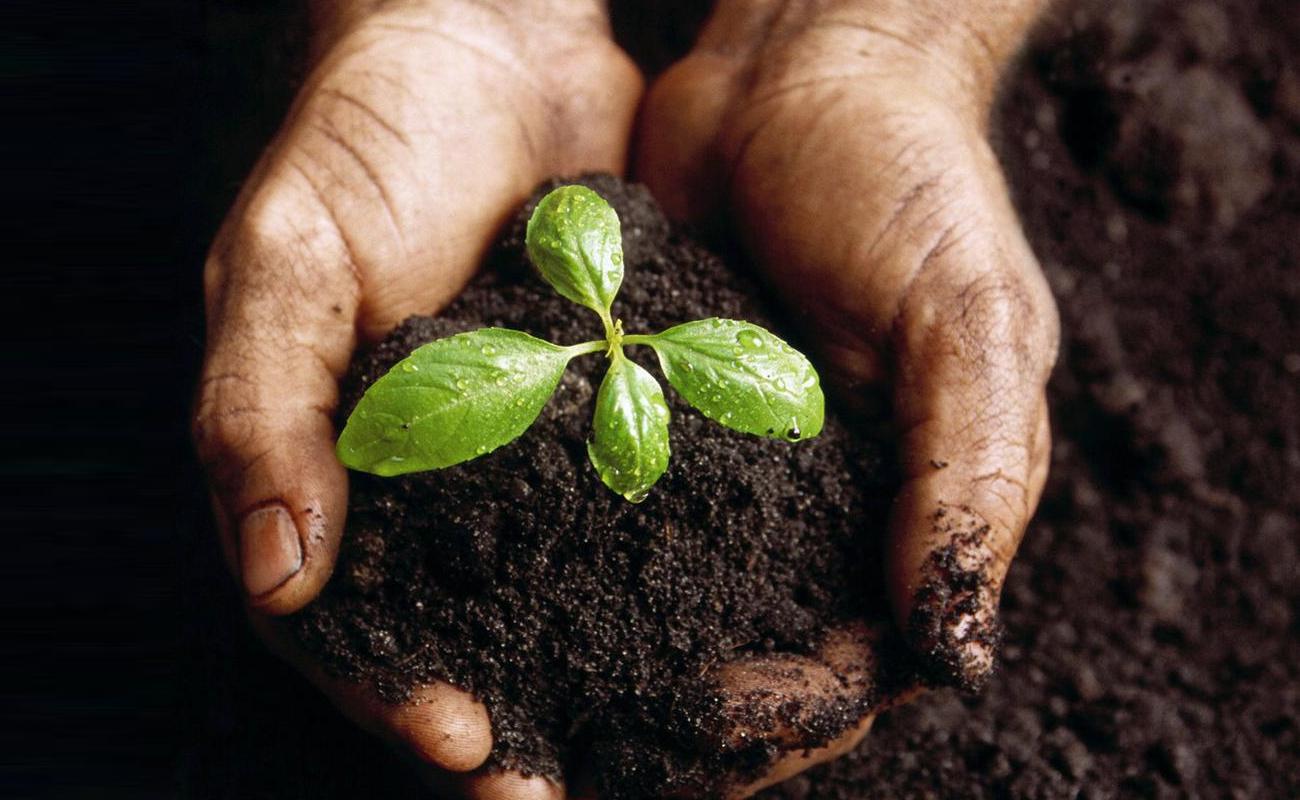 Humus de lombriz, abono orgánico suelo fértil